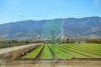 California-061
