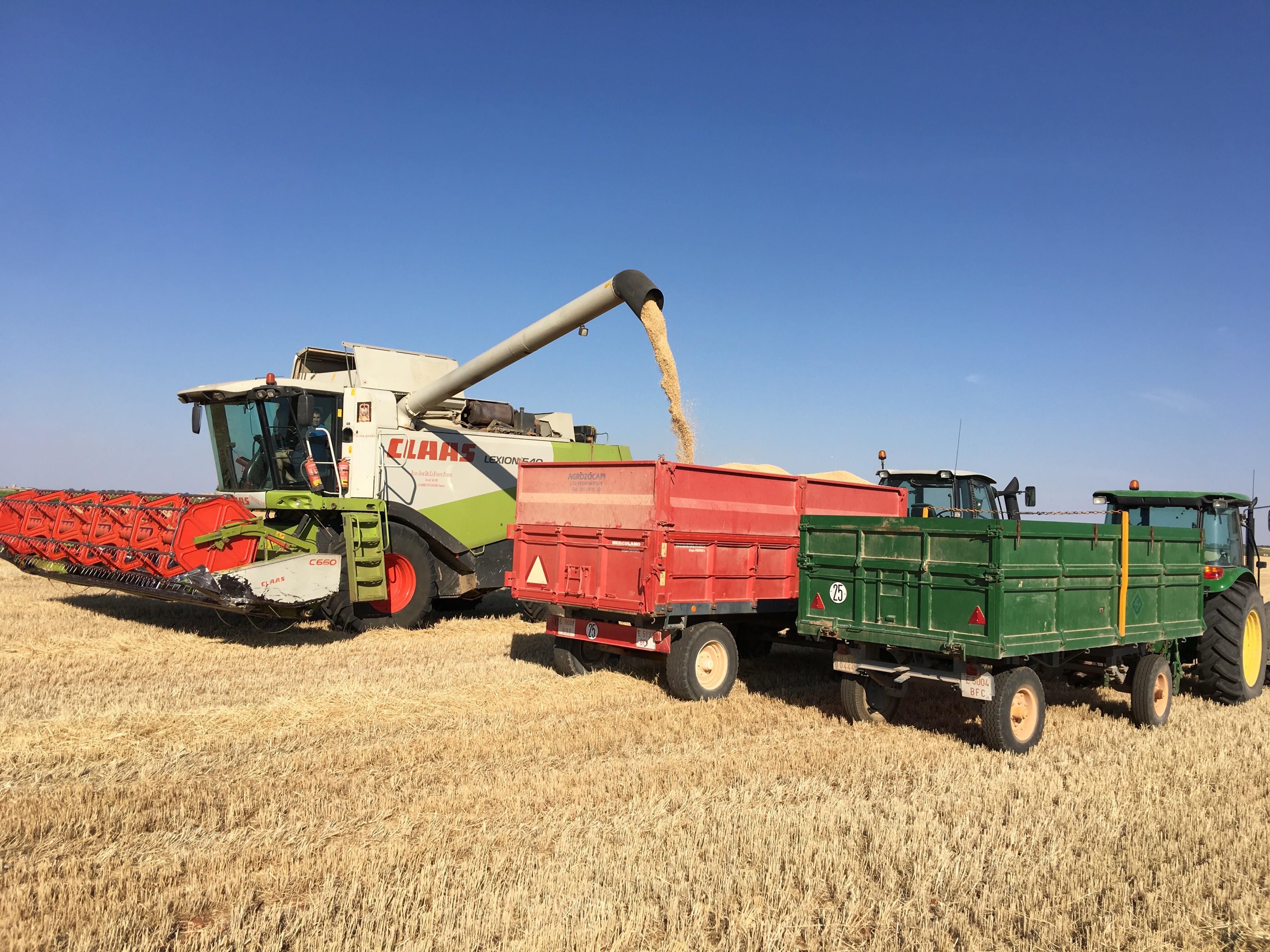 Cosecha-harvesting-2017-20