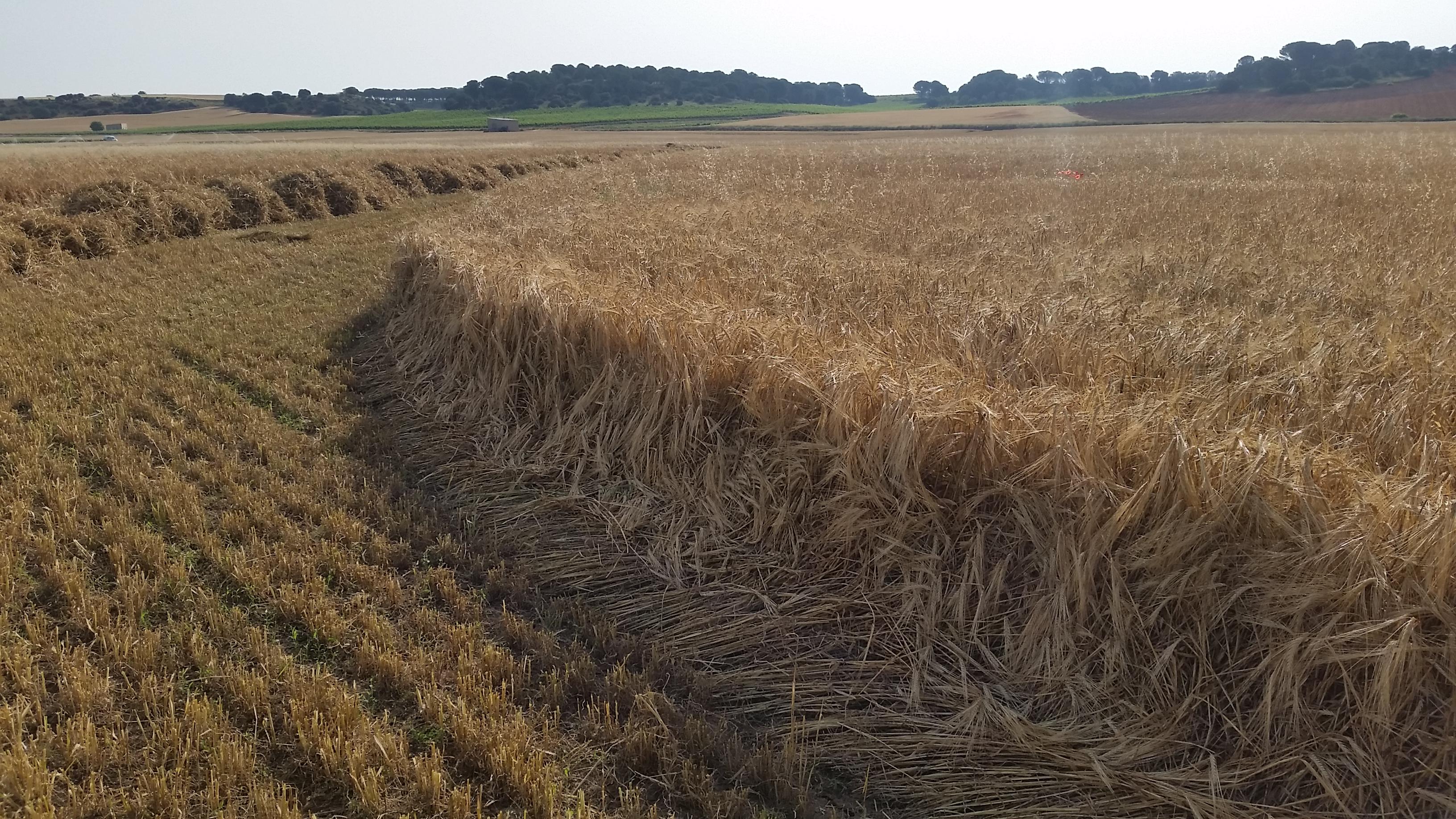 cosecha_cereales-07