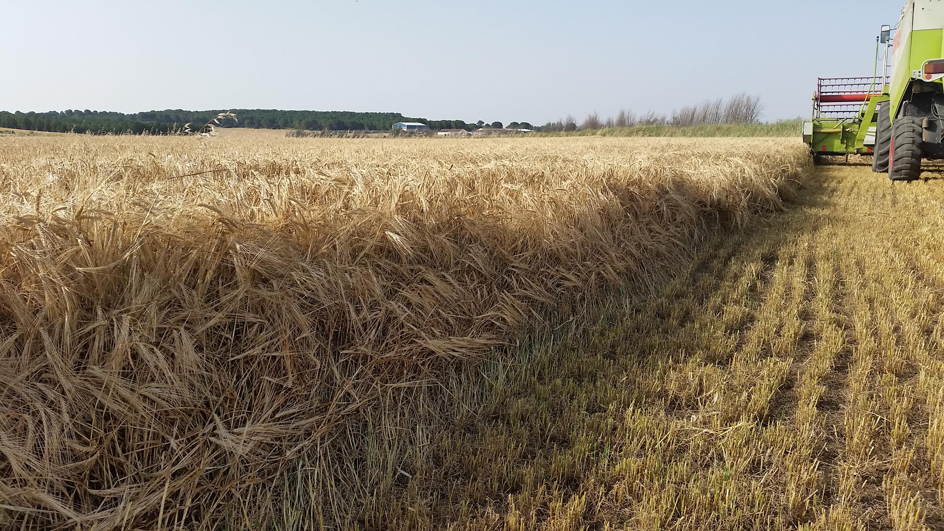 cosecha_cereales-08