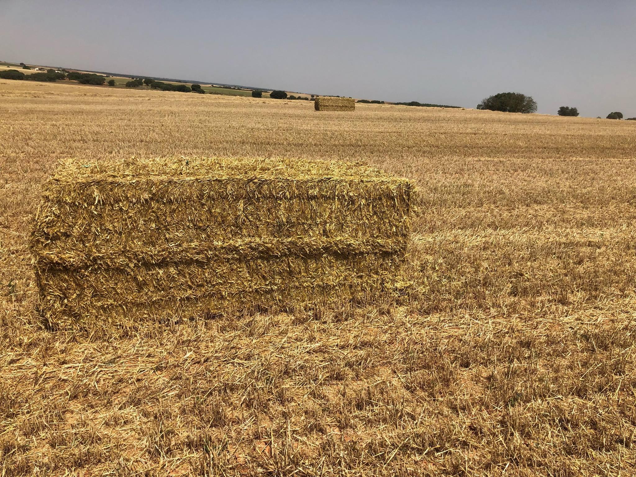 cosecha_cereales-16