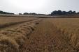 cosecha_cereales-02