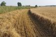 cosecha_cereales-10