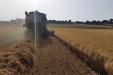 cosecha_cereales-11