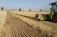 cosecha_cereales-12