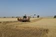 cosecha_cereales-13