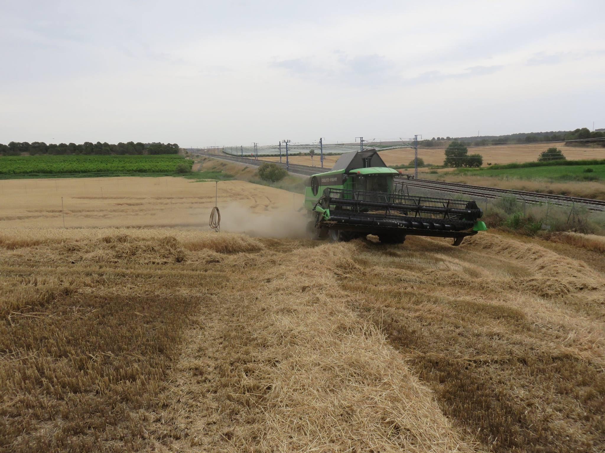 cosechadora-Deuzt-Fahr-C9602-TSB04