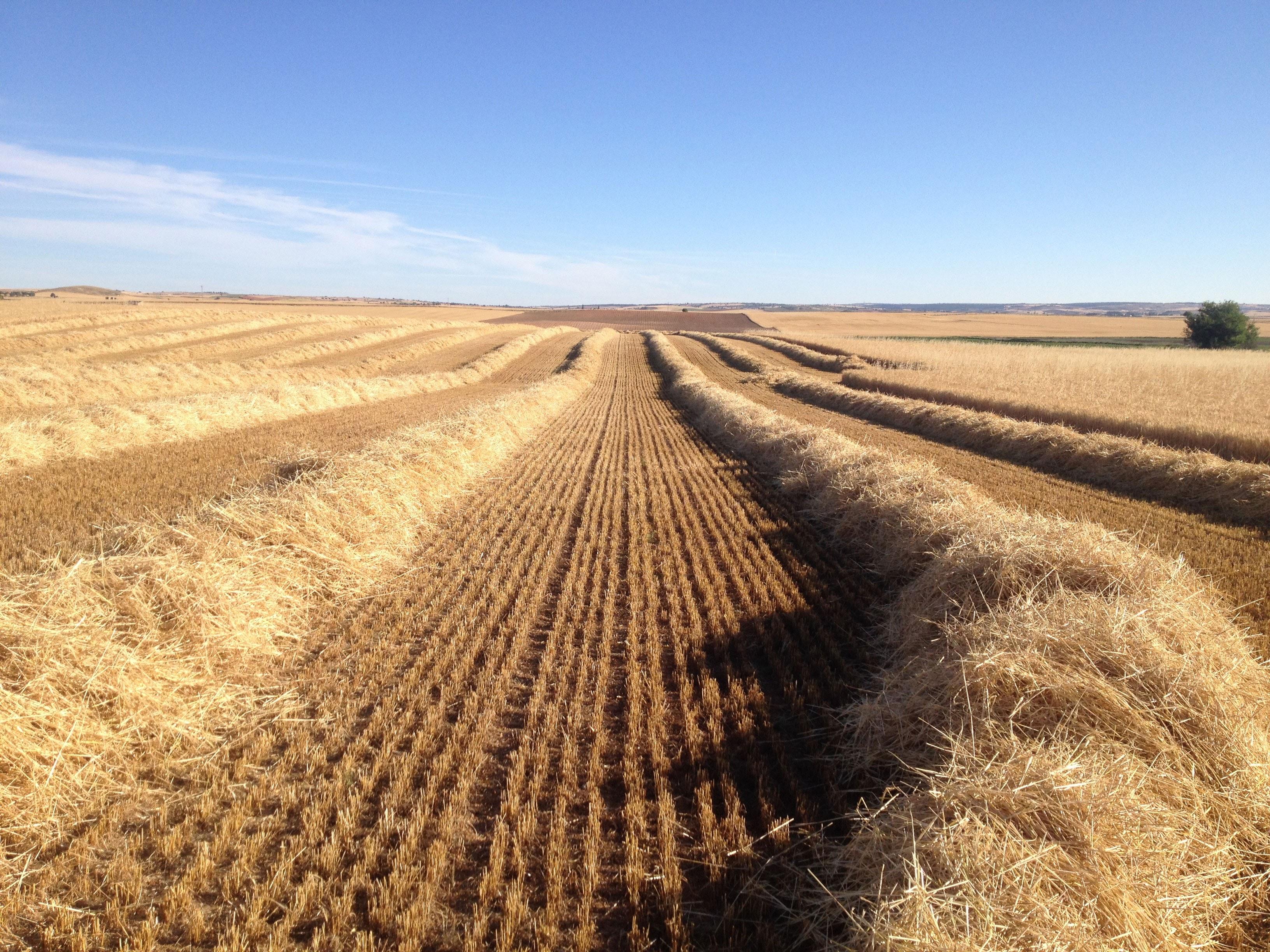 Cuaderno de campo herramienta para gestionar tus cultivos for Herramientas de campo