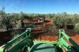 Oro-verde-español-aceite-oliva11