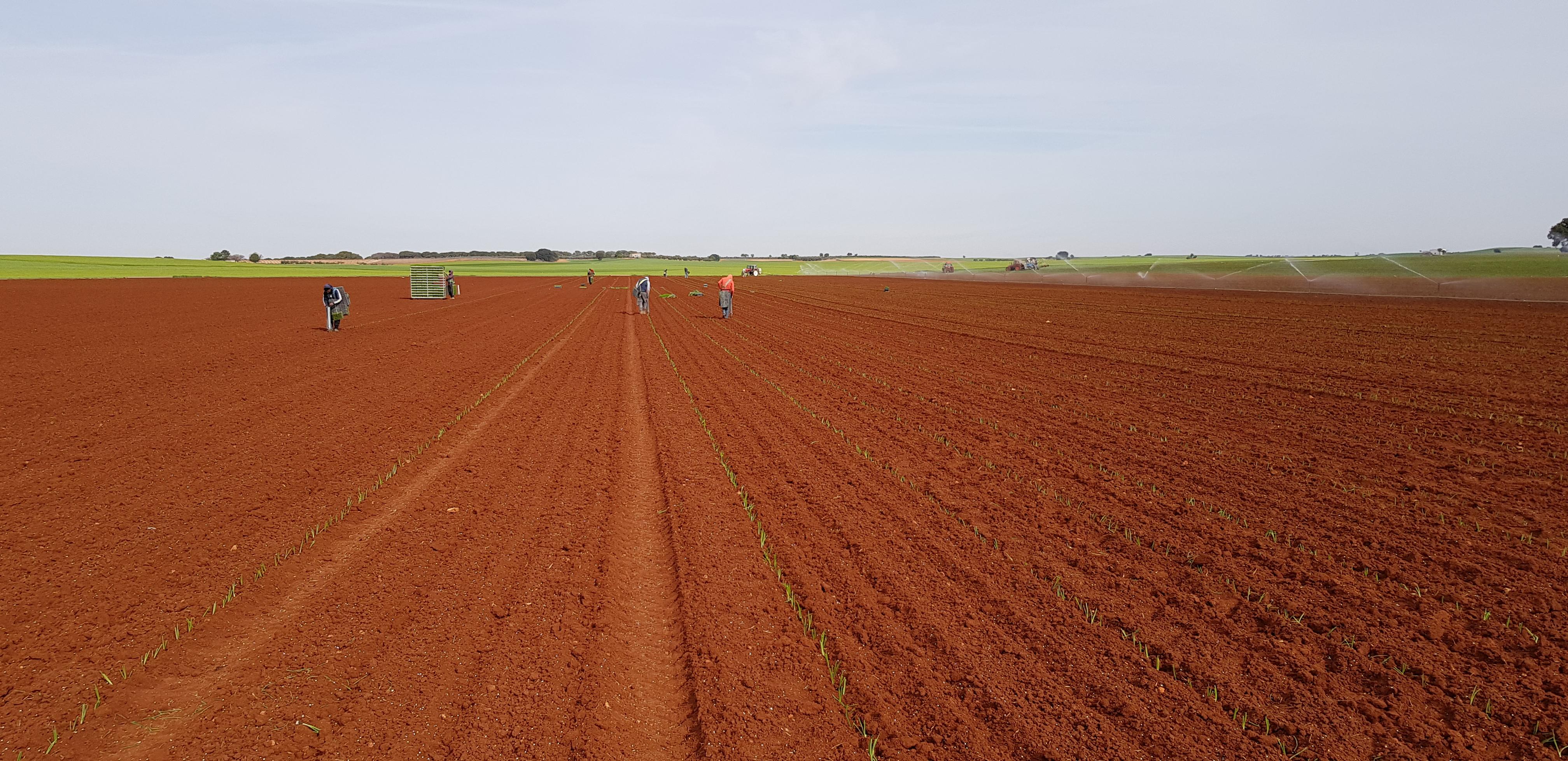 plantandoCebollas-07