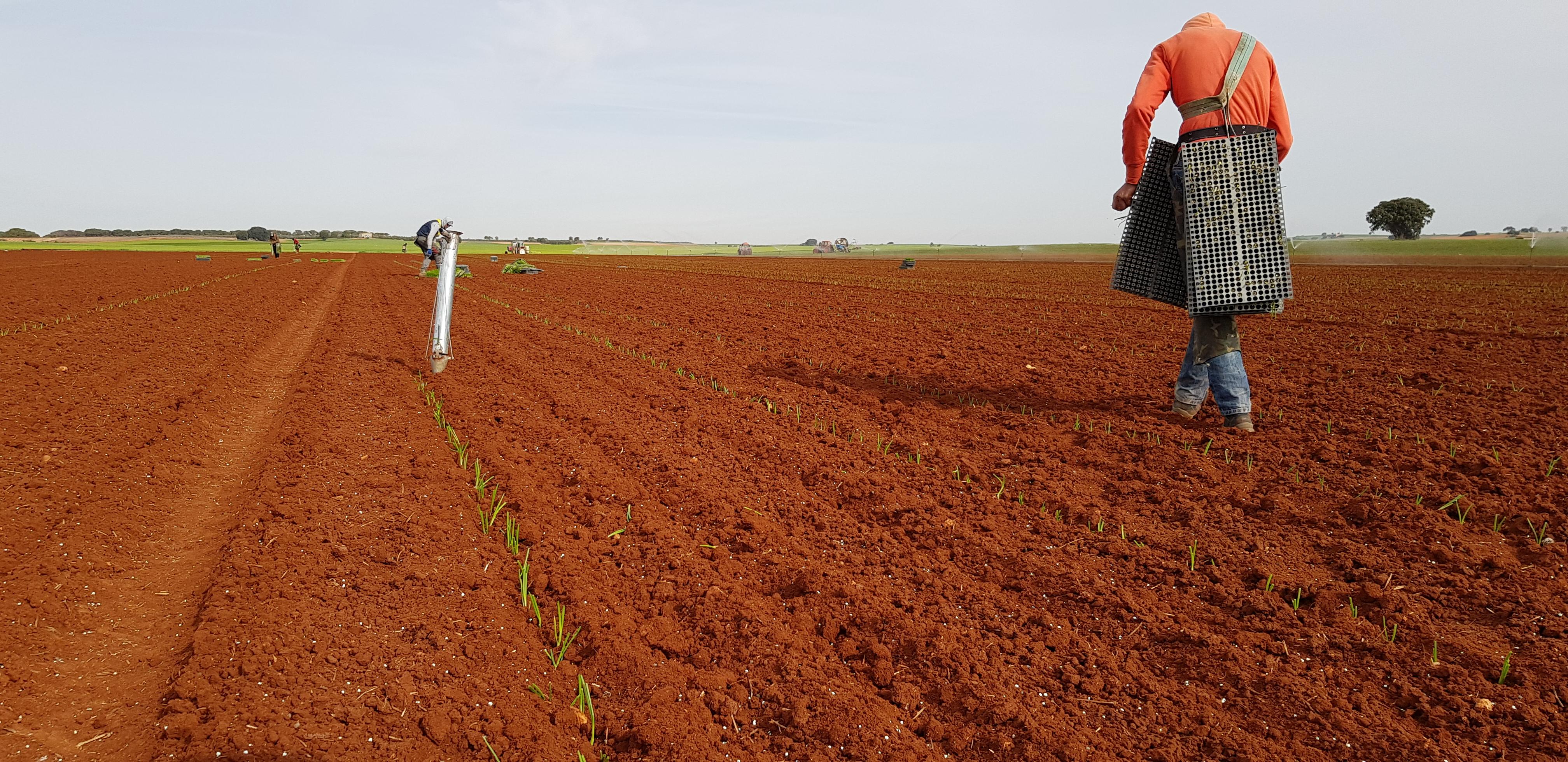 plantandoCebollas-08