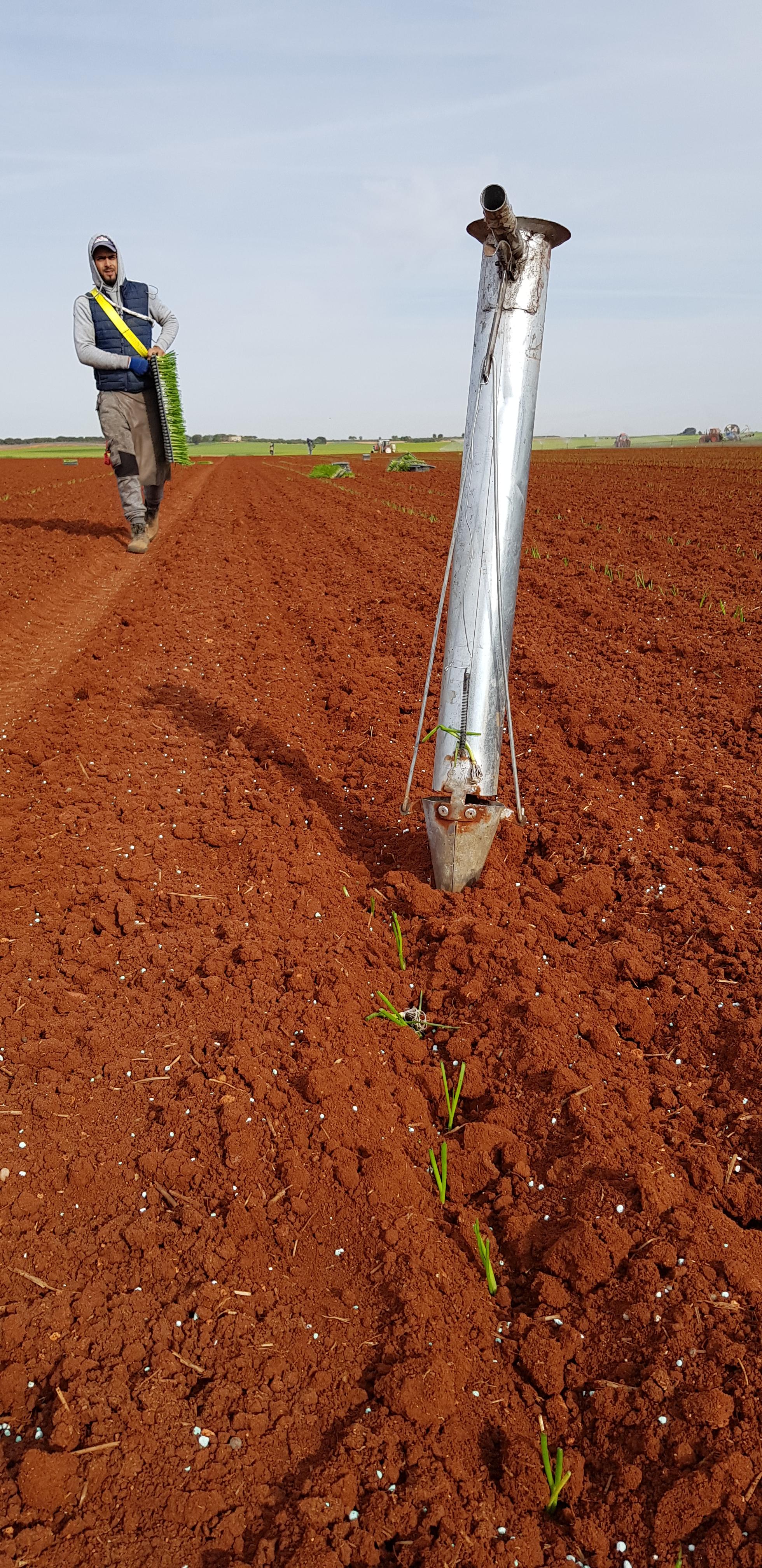 plantandoCebollas-09
