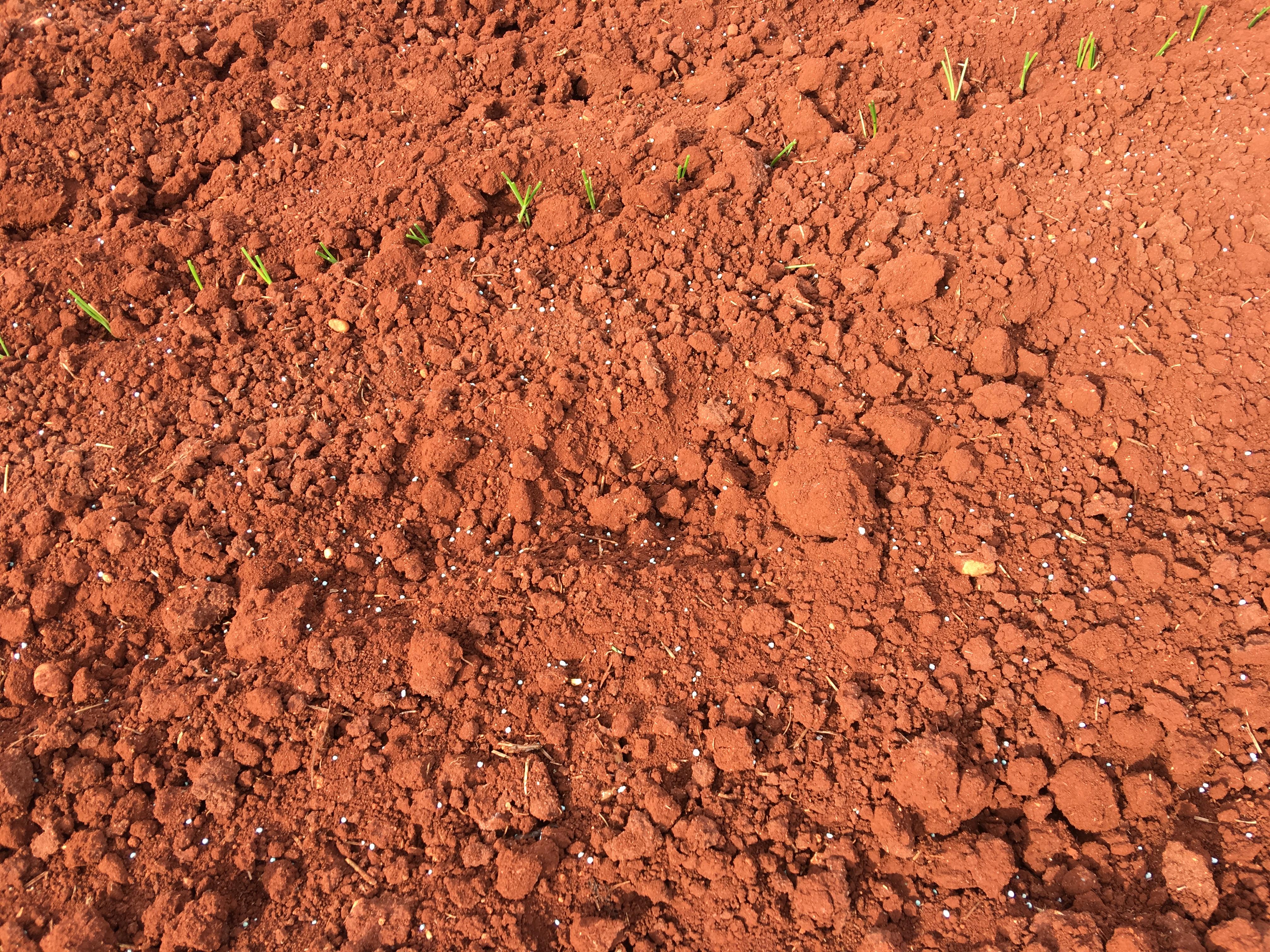 plantandoCebollas-19