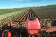 Plantando_patatas_salamanca-01