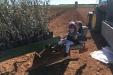 PlantacionOlivar_riegoDeImplantacion-15