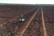 PlantacionOlivar_riegoDeImplantacion-23